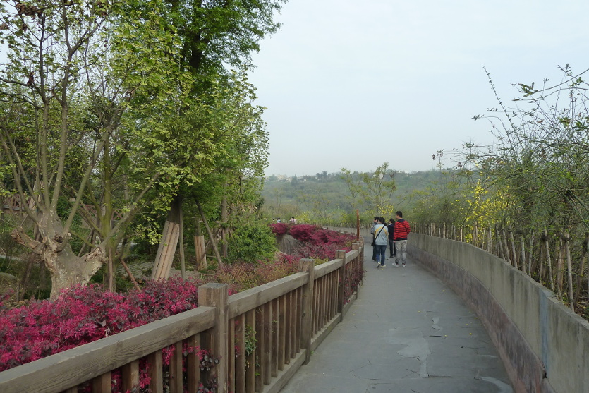 panda research base chengdu china